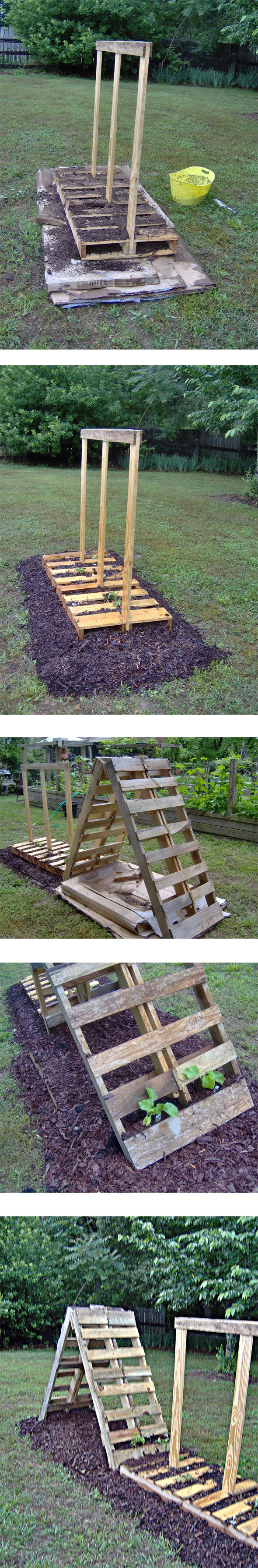 1000+ images about Trellis on Pinterest | Gardens, Old ...