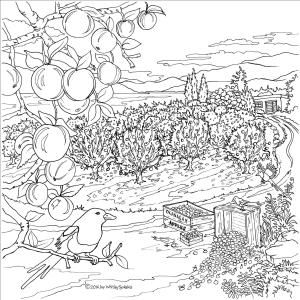 Apples – Naramata Bench Wine Country, a colouring book designed and Illustrated by Joy Whitley Syskakis of Colour the Okanagan Illustrations Company. Request YOUR very own copy today via our website! All images and illustrations are Copyright protected!