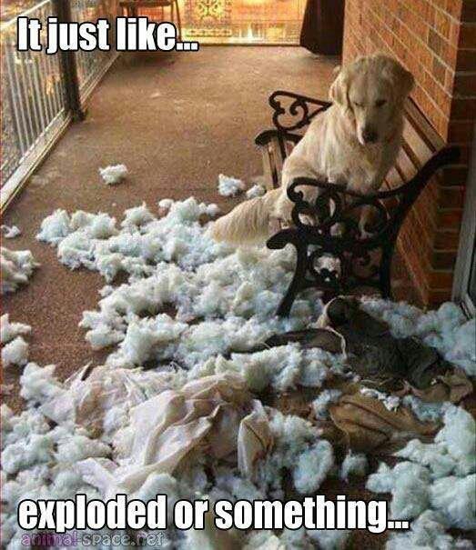 It just like...exploded or something.  Funny dog joke!