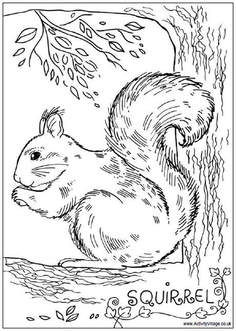 Squirrel colouring page i heart coloring pages for Coloring page of a squirrel