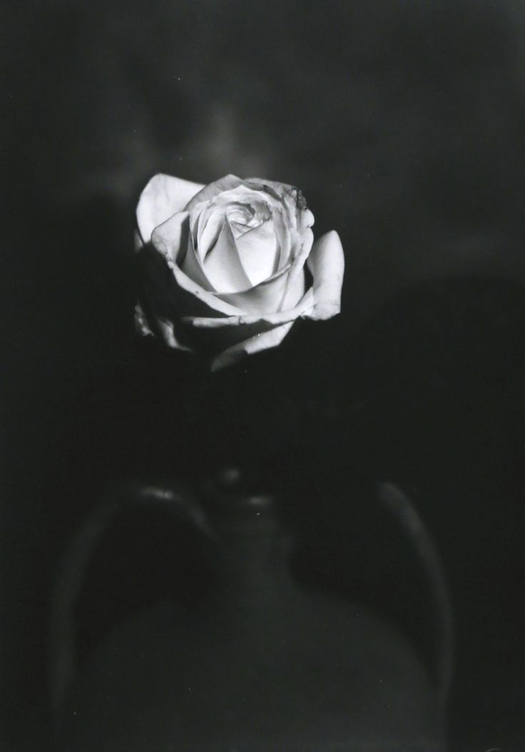 For sale on Livin'art / Photography Section  ROSE  Photo made with Optical Bench  cm 14x9,5 mounted on professional passepartout cm 50x35  Printing Techniques: contact plate on barium paper ILFORD – Edition 10