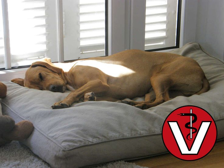 Hundekissen der Extraklasse