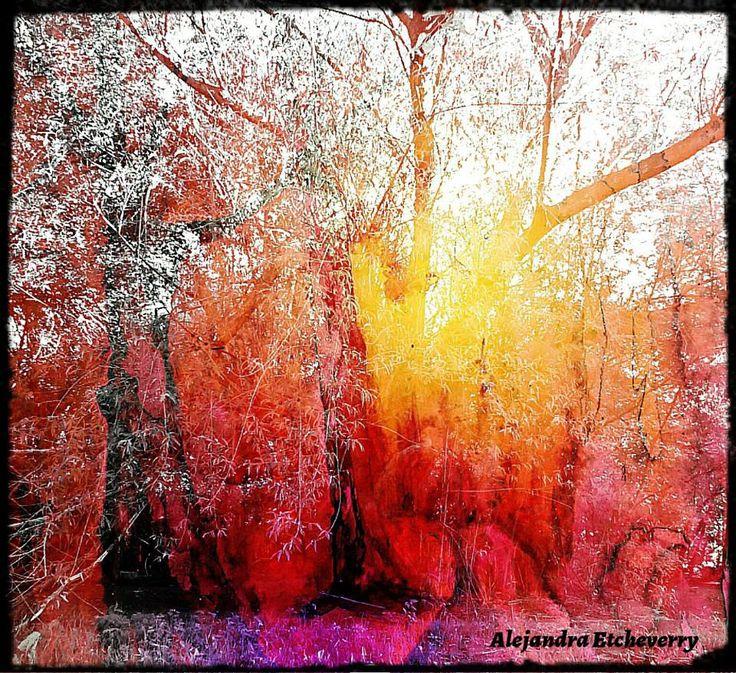 Espíritu de los árboles - Fotografía intervenida - San Luis, Argentina - Autora: Alejandra Etcheverry