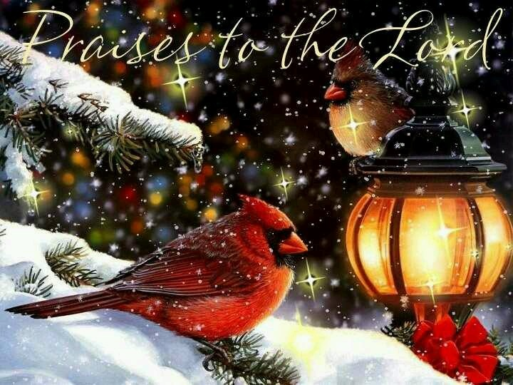 Cardinal Christmas Scenes Pinterest Cardinals And