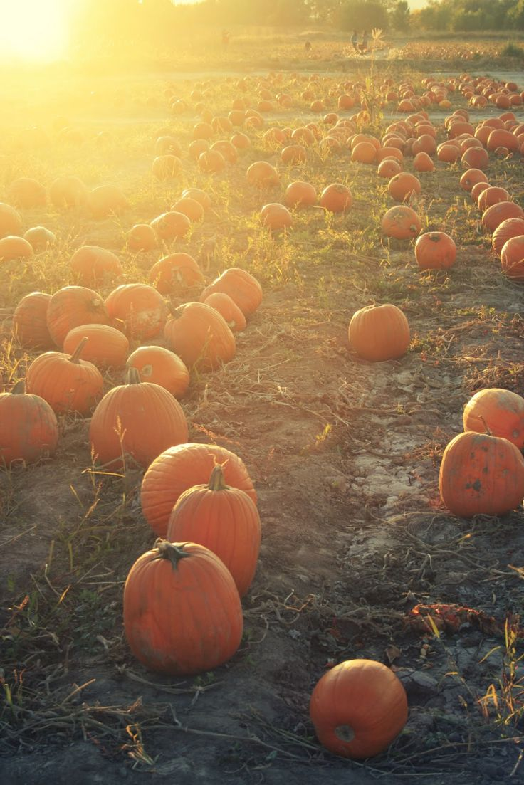 12 best l 39 automne fall images on pinterest beautiful places autumn fall and autumn leaves - Date de l automne ...