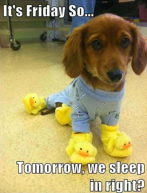 Awesome ! We're proud you want it ! Allow us know if you have requests anyway , we're happy tohelp : ) Here's my shop ==> https://etsytshirt.com/dachshund #ilovemydachshund