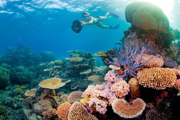 The great barier reef is one of the best places for snorkelling in australia credit tourism - Best place to dive the great barrier reef ...