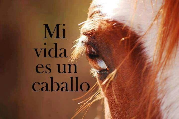 Mi vida es un caballo...