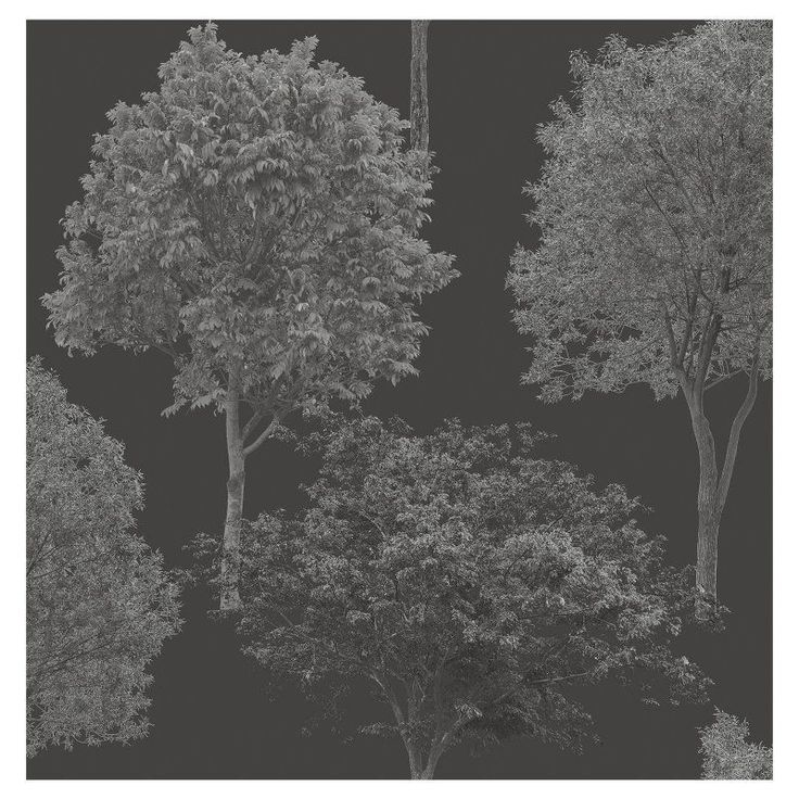 Brewster Tree Tops Photographic Tree Wallpaper Black - FD23279