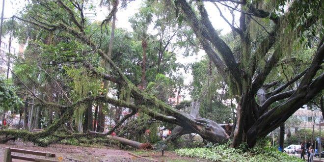 Queda recorde de árvores em 2014 indica impacto de mudanças climáticas em Campinas | Agência Social de Notícias