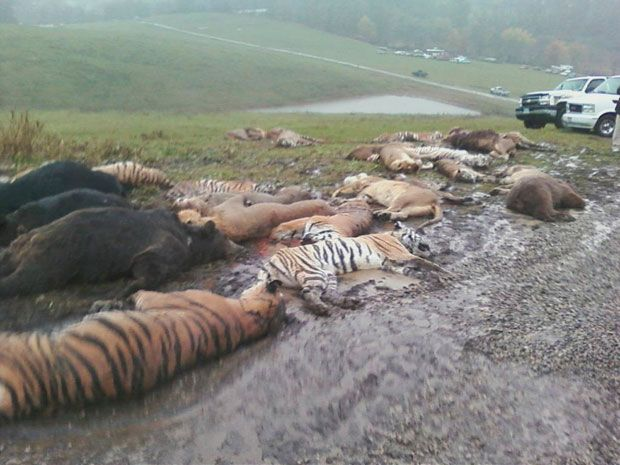 Image result for BEST GORE ANIMALS SLAUGHTER