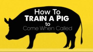 How To Train a Pig To Come When Called