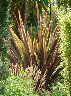 17 best images about garden plants on pinterest gardens. Black Bedroom Furniture Sets. Home Design Ideas