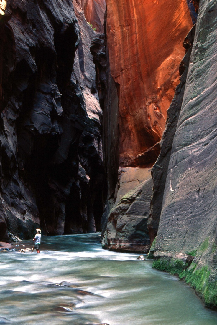 My husband and I walked up the Virgin River in Zion Nat. Park to the narrows and it was one of the most awe inspiring things I have ever done.: Zion National Parks