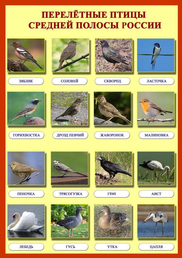 птицы россии фото с названиями и описанием вам нравится тема