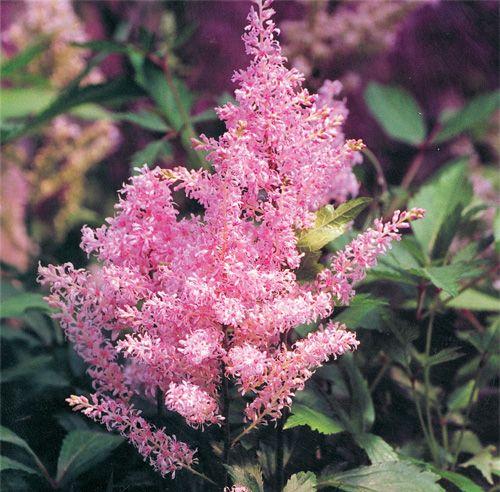 L'attrait d'un aménagement extérieur bien fleuri est indéniable…mais le jardinage n'est pas votre passe-temps préféré?Voici notre sélection de vivaces à la floraison facile et prolongée.Découvrez ces plantes qui ne demandent qu'à être admirées!