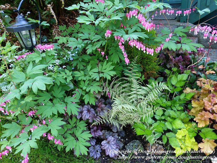 Shade part sun plants in my garden heuchera 3 varieties for Porch plants that are part sun and part shade