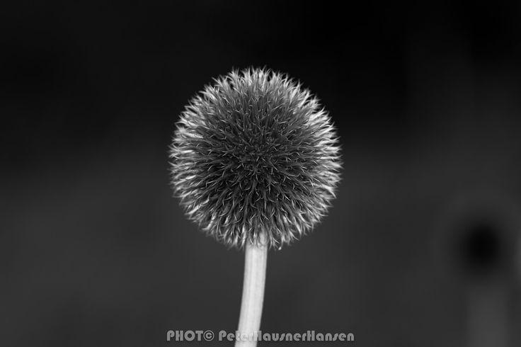 Flower in B&W - Test of new Camera