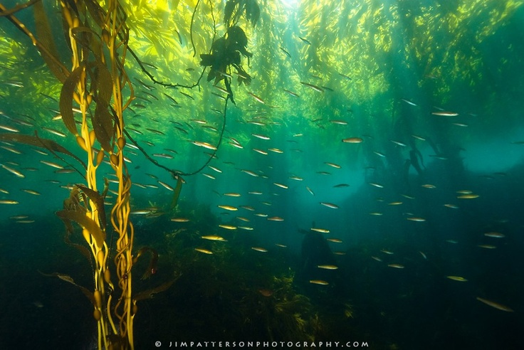how to see underwater the forest
