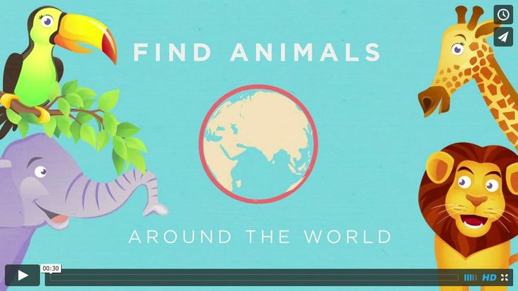 After effects motion graphics animation - interactive ebook for kids about animals around the world