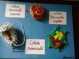 maquetas de celula procariota - Buscar con Google