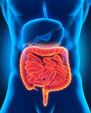 Schlank oder dick? – Darmbakterien haben oftmals ihre Finger im Spiel