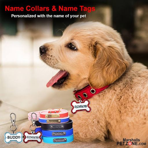 Latest And Trendy Collection Of Customized Collars And Name Tags