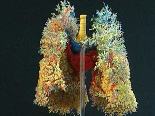 De lucht die je inademt komt binnen via je neus of mond, en komt via de luchtpijp tenslotte in je longen terecht. Deze organen samen heten het ademhalingssysteem.