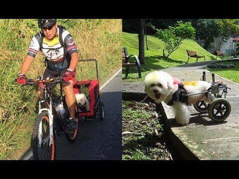 💚 Este perrito sobre ruedas se salvó gracias al amor 🐕