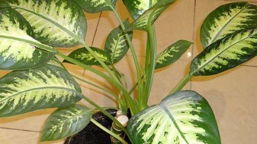 Немедленно уберите эти растения с подоконников: тихо убивают