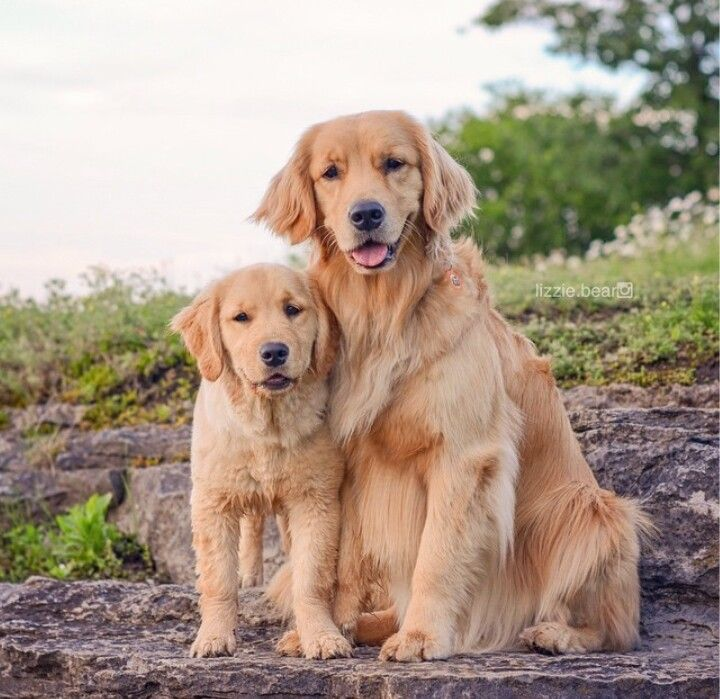 6265 Best Images About Dogs On Pinterest