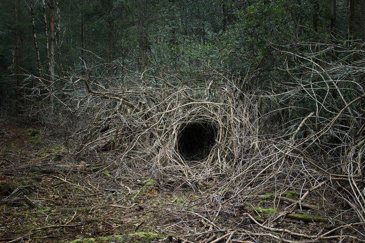 woodland dwellings by ellie davies
