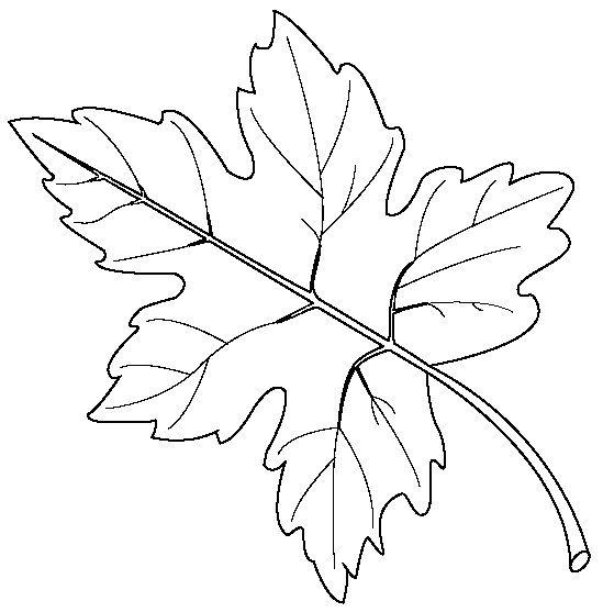 картинка трафарет кленового листа
