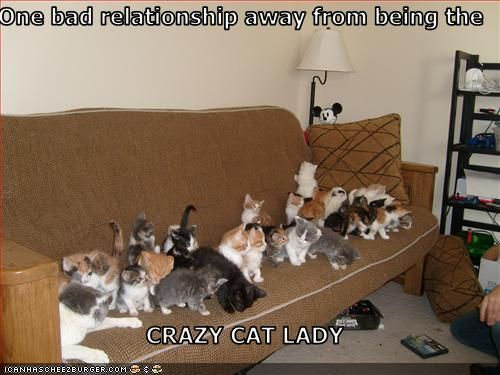 Dating is awkward crazy cat lady