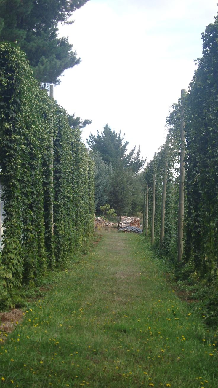 Nuestro Hop Yard Cerveza Kaf - Own Hop Yard Cerveza Kaf