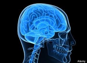 recipe: brain of revolution [24]
