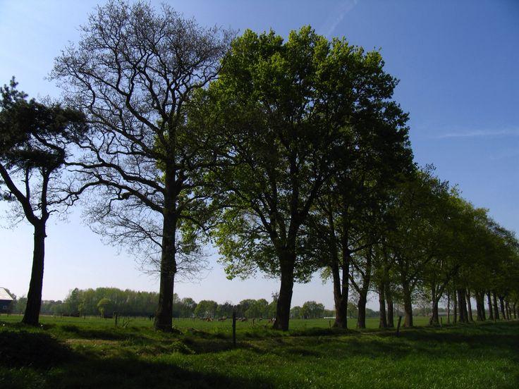 Oisterwijk, The Netherlands. #oisterwijk #thenetherlands