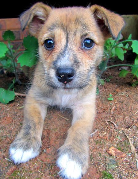 cutest dog ive ever seen; pingu-the-terrier-mix