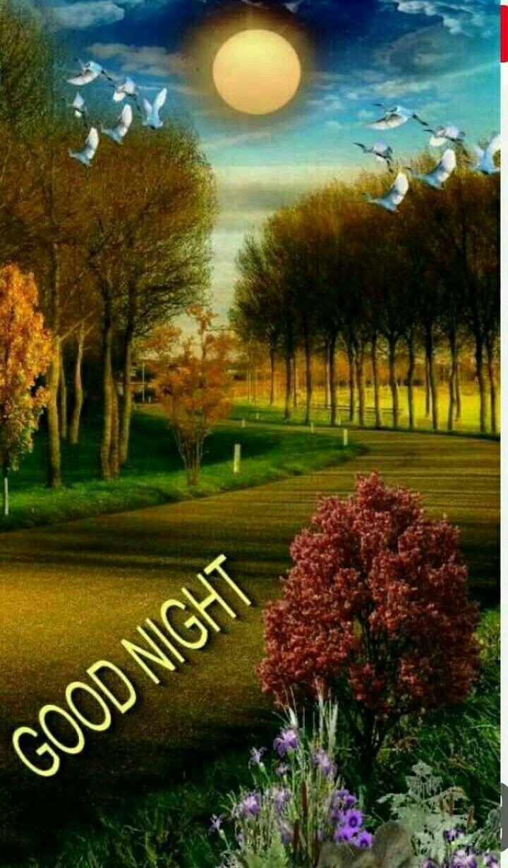 Pin By Dianenguyen On Good Night Beautiful Beautiful Good Night Images Good Night Image Good Night Blessings