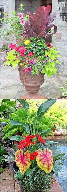 Colorful flower gardening in pots made easy with 38 best designer plant list for each container and sun vs shade locations. Grow a beautiful flower garden with these proven combinations and success tips! - A Piece of Rainbow #gardeningwithcontainers