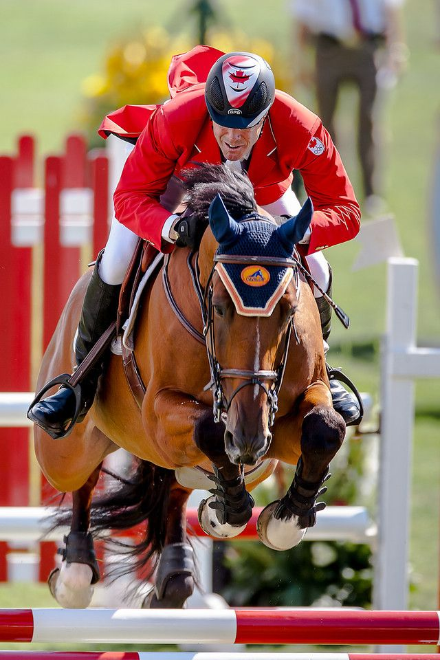 17 Best Images About Horses 9 On Pinterest Equestrian