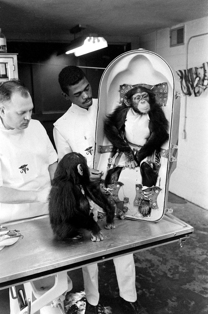 """On the morning of January 31, 1961, a 5-year-old chimpanzee named """"Ham"""" ate a breakfast of baby cereal, condensed milk, vitamins, and half an egg. Then the playful 37-pound primate went out into the Cape Canaveral light and made aeronautic history: Aboard a NASA space capsule — traveling almost 160 miles above the Earth — he became the first chimp in space."""
