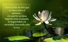 MI PEQUEÑO MUNDO: Significado de Flor de Loto