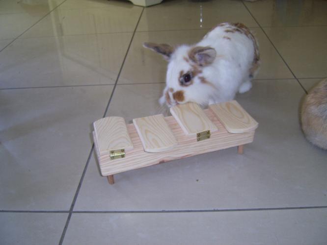 jouet lapin                                                                                                                                                                                 Plus