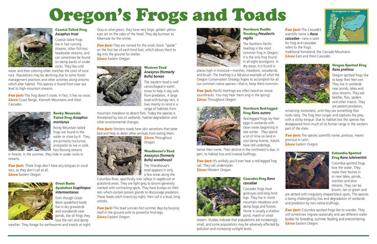 Frogs are cool oregon 39 s frogs and toads by the oregon for Oregon fish and wildlife