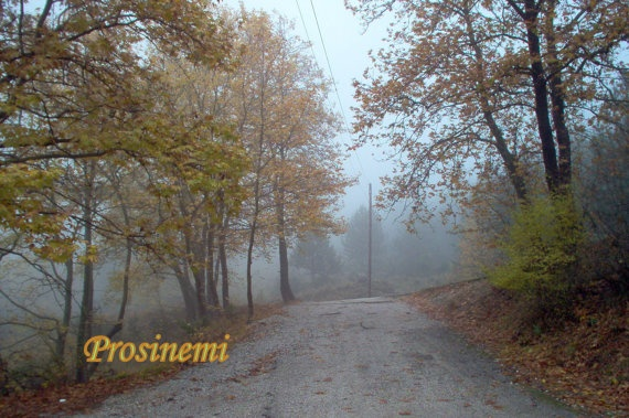 Morning autumn fog in the forest by prosinemi on Etsy, €20.00