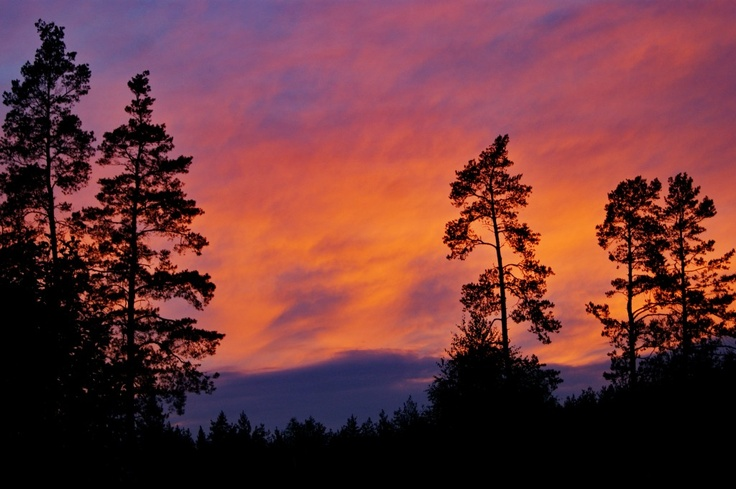 #nature #landscape #forest #trees #sky #clouds #summer #pine #sunset #sony #sonyalpha