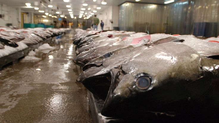 nice U.S. government, Walmart allege price fixing by canned tuna industry - Business