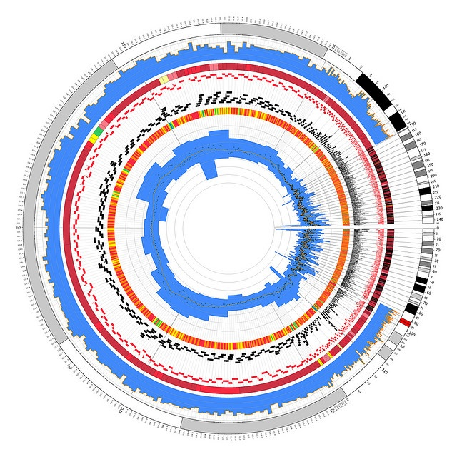 Circos sample 05 - Ethan Hein - #infographics, #cicular