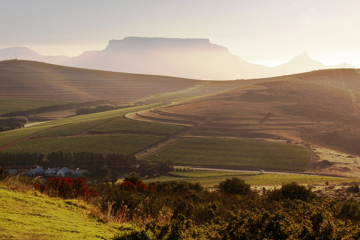 Durbanville Valley #SouthAfrica #Winelands
